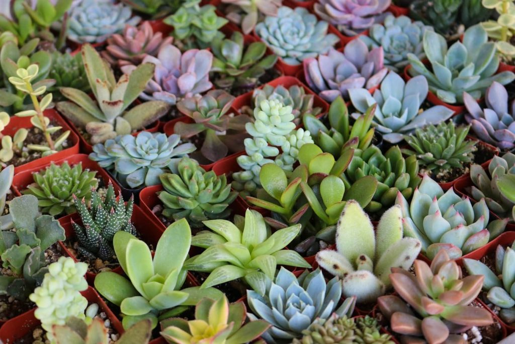 living gift succulents