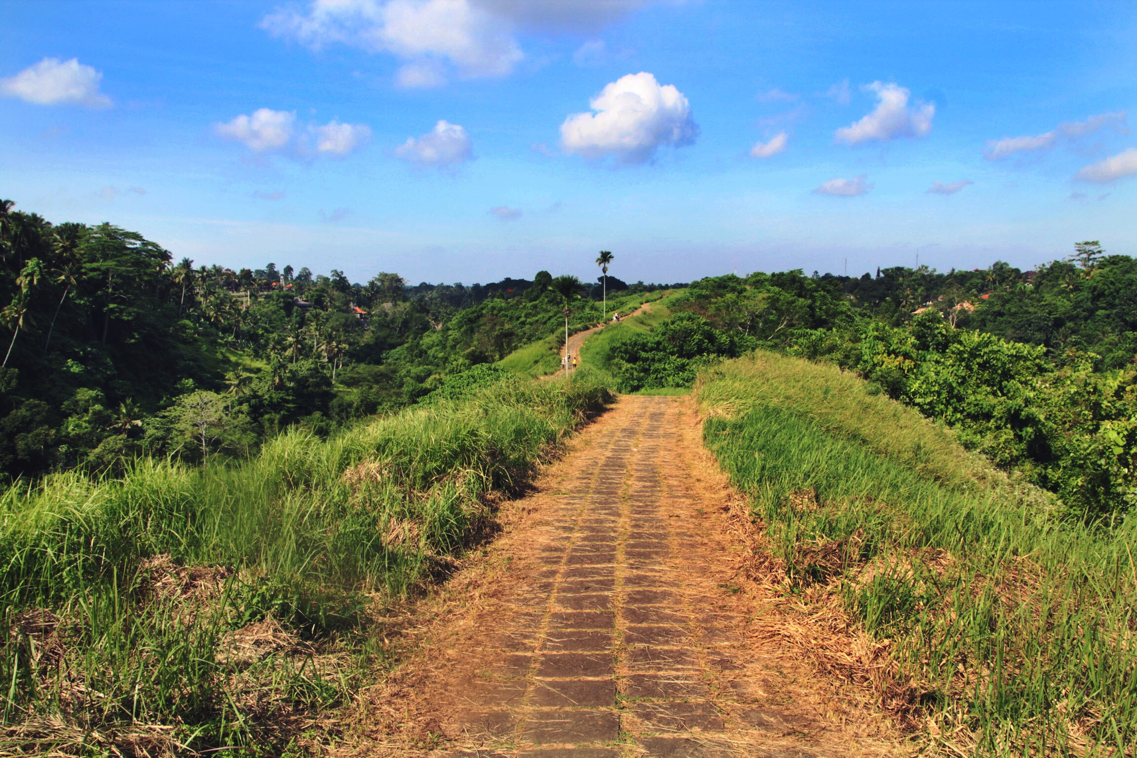 campuhan ridge walk ubud