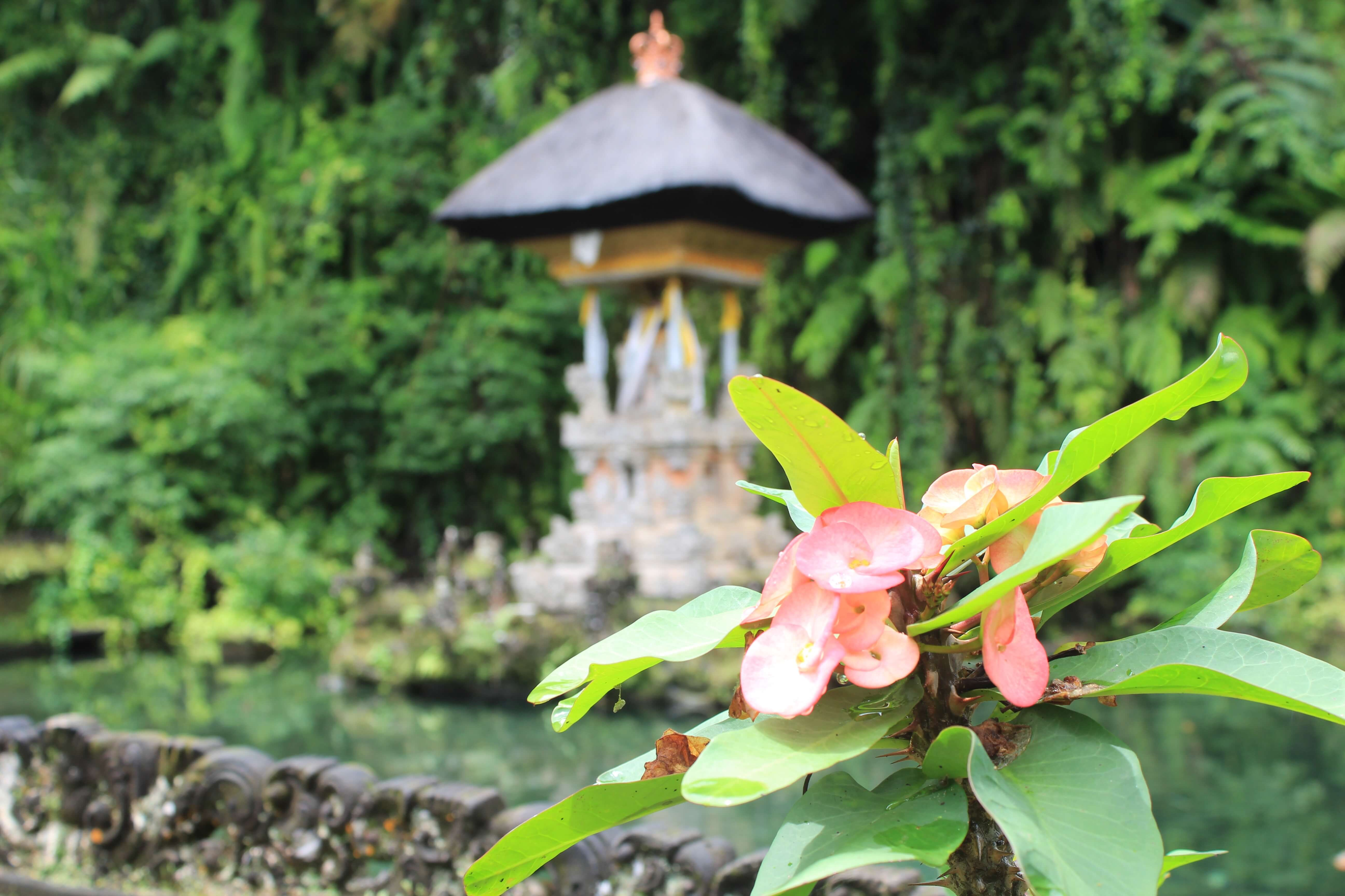 water temple in ubud bali