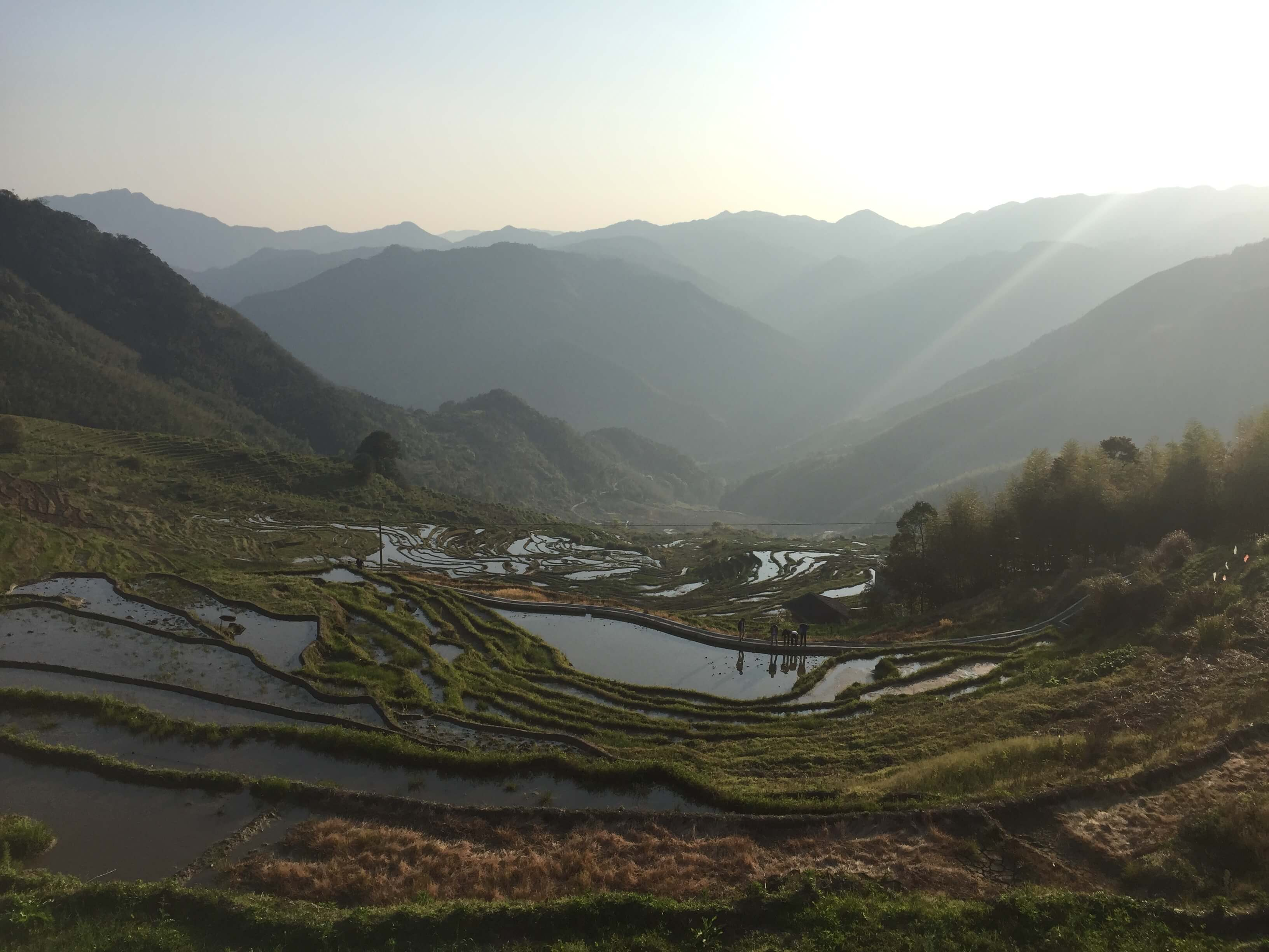rice terraces in fujian province china